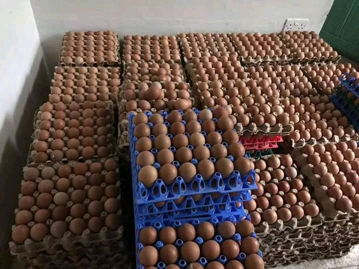 Good quality eggs for sale